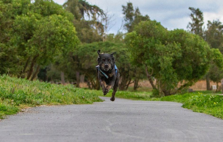Aiden running on path